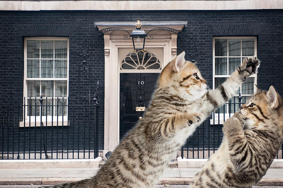 Turf Wars: Number 10 cats battle it out