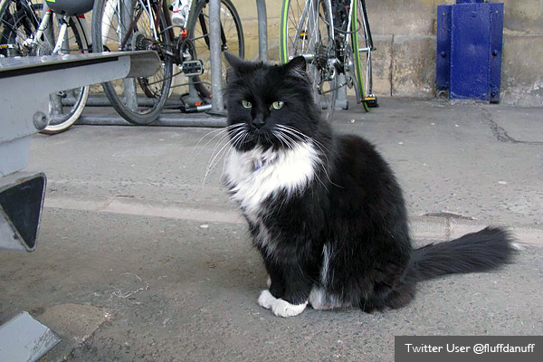 Cat promoted to senior role by rail company