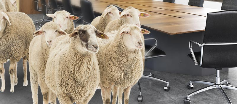 HR needs to 'stop bleating' about being on the Board, says Fosway CEO