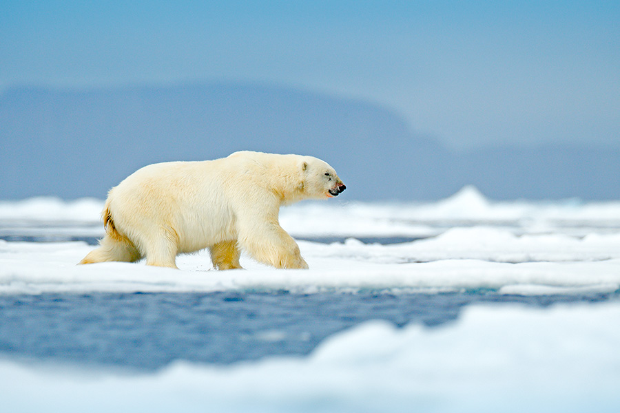 How HR can make climate a priority within their firm