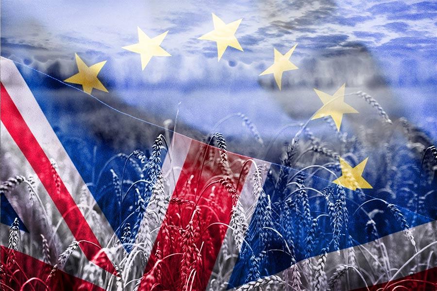 Brexit knocks UK off 'pedestal' as EU workers look elsewhere