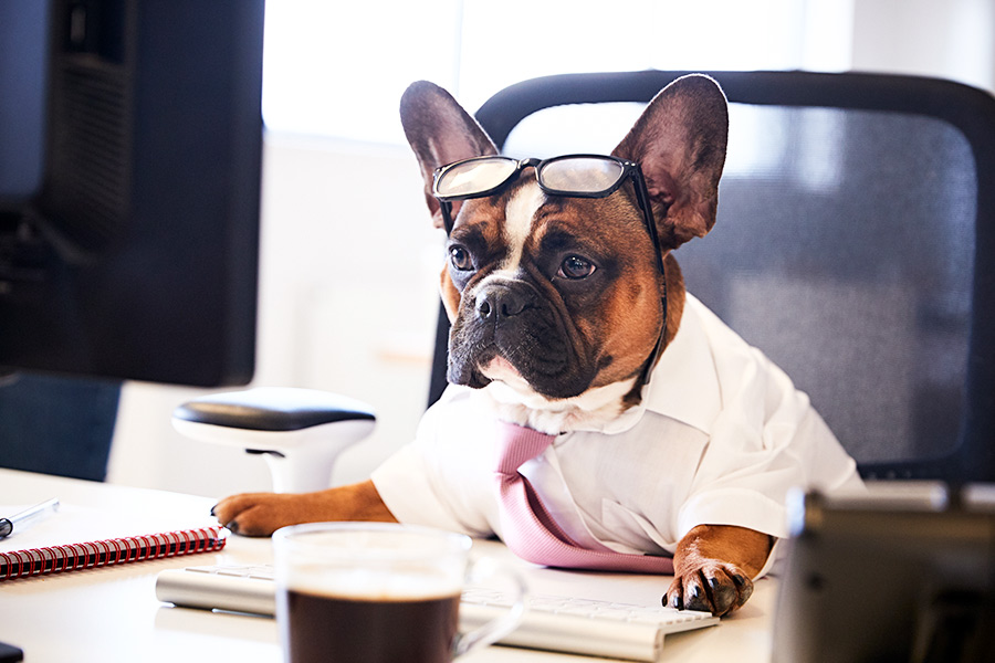 Nestlé's Head of HR: Why you should have a dog-friendly office