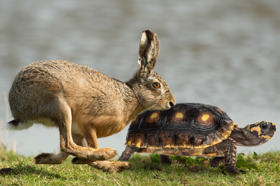 Are you the Tortoise or the Hare?