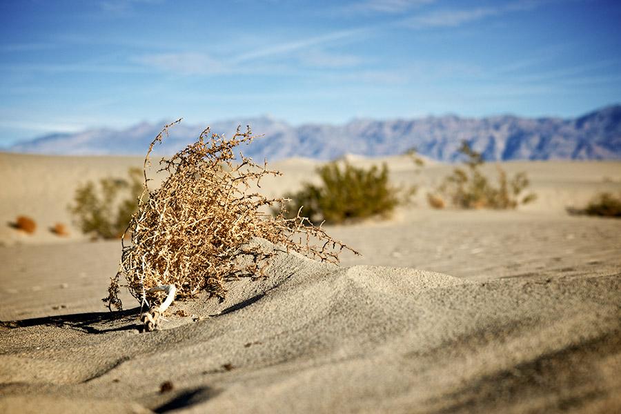 Job application 'desert' hits HR skills delivery