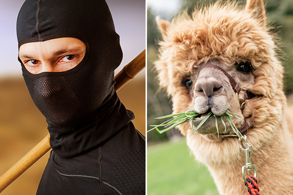 'Alpaca farming' and 'ninja practice' too much CV information?