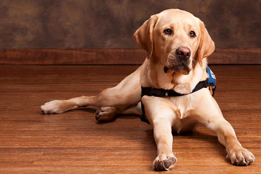Guide dog candidate finally lands job after discrimination ordeal