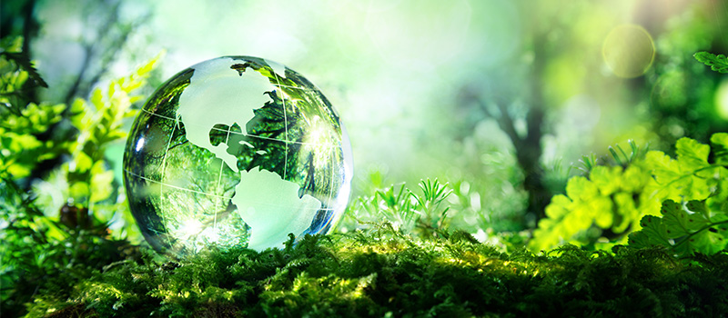 Top five eco-friendly companies in the world revealed