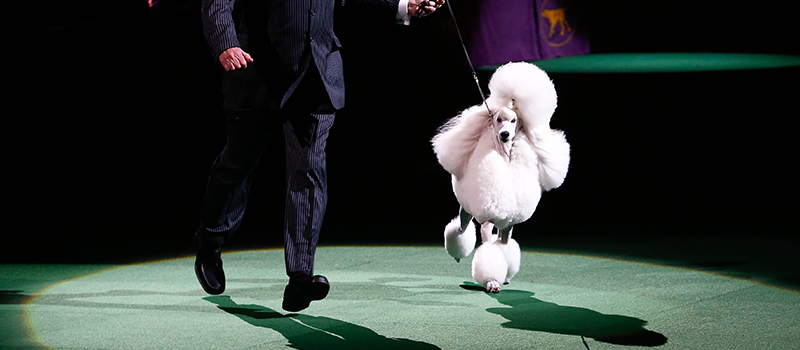 Ex-presenter accuses Crufts of ageism