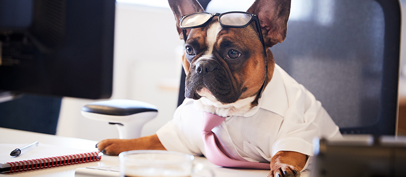 Could canine co-workers fix back-to-work anxiety?