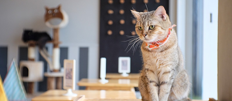 A stroke of luck - Cat Café looking to hire purrfect candidate
