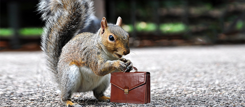 What can HR learn from problem-solving squirrels?