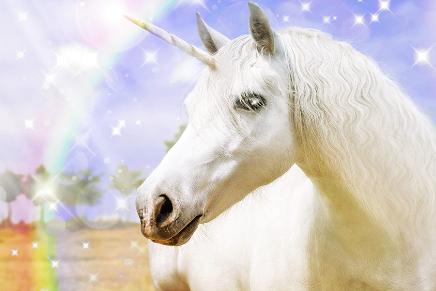 Top 5 Unicorns to look out for in 2017