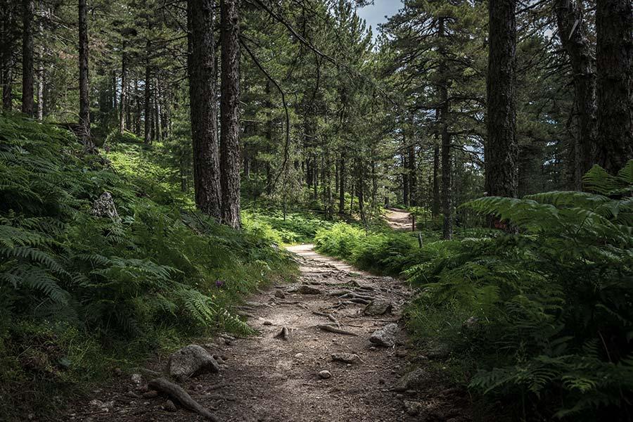Boss dumps worker's body in forest