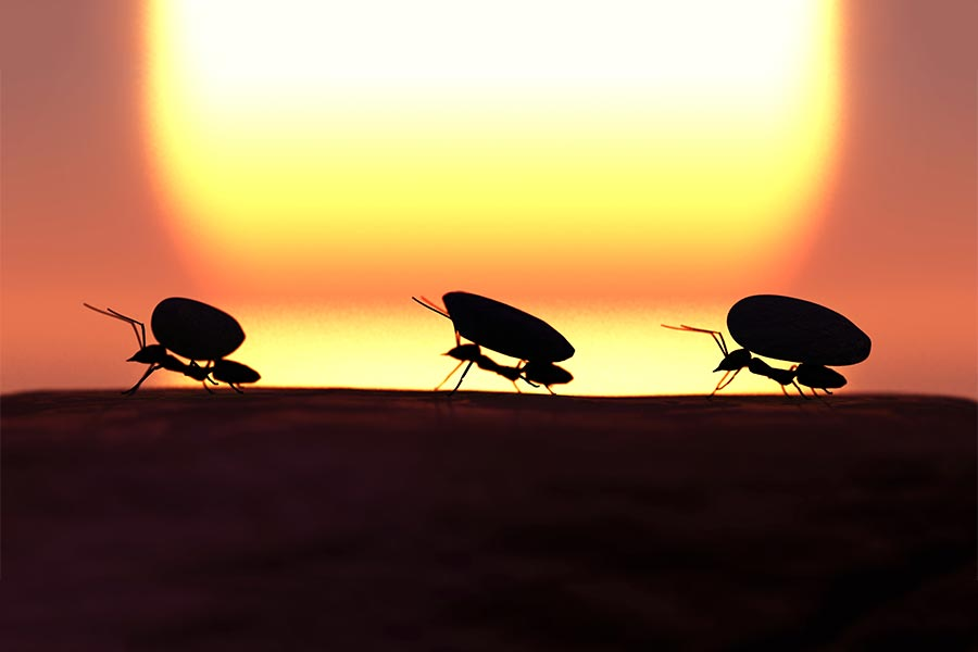 3 work-life lessons taught by ants
